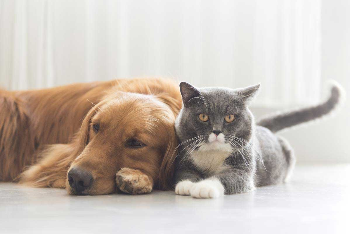 about our veterinary practice Grand Junction, CO